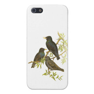 European Starling iPhone 5 Covers