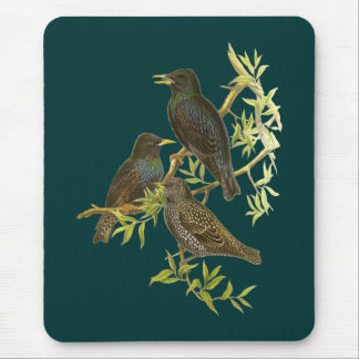 European Starling Mouse Pad