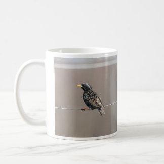 European Starling Coffee Mugs