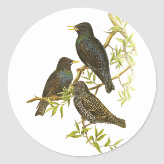 European Starling Stickers