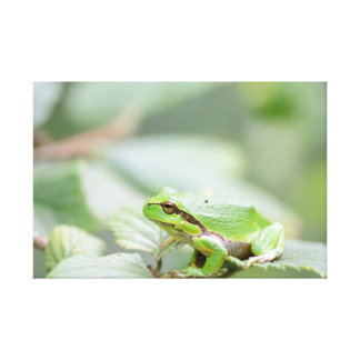 European tree frog in green canvas print