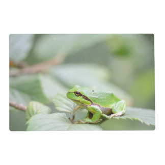 European tree frog in green placemat