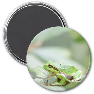 European tree frog in green round magnet
