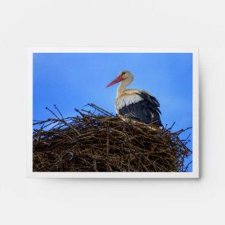 European white stork, ciconia, in the nest envelope