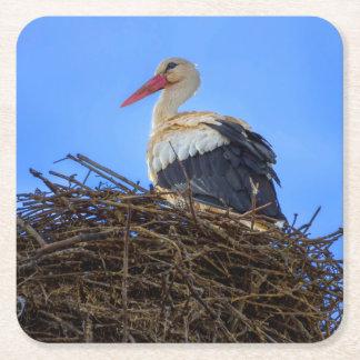 European white stork, ciconia, in the nest square paper coaster