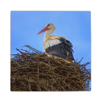 European white stork, ciconia, in the nest wooden coaster