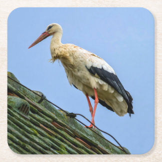 European white stork, ciconia square paper coaster