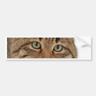 European Wildcat Bumper Sticker