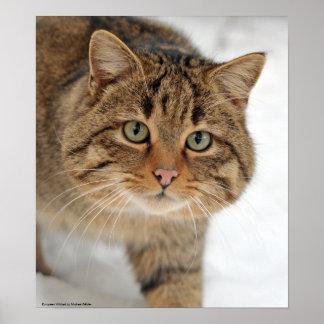 European Wildcat Poster