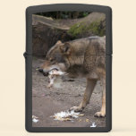 European Wolf Eating Zippo Lighter
