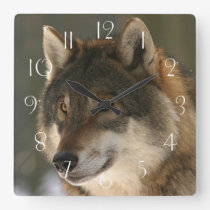 European Wolf Square Wall Clock