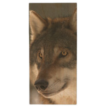 European Wolf Wood Flash Drive