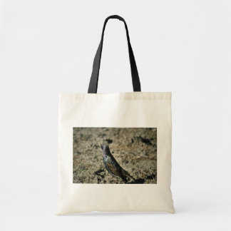 Europeo Starling Bolsas Lienzo
