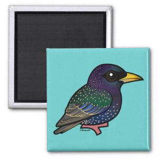 Europeo Starling de Birdorable Imanes