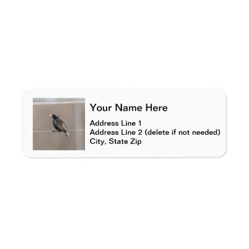 Europeo Starling Etiqueta De Remite
