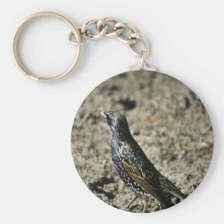 Europeo Starling Llavero Personalizado