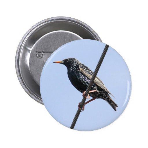 Europeo Starling Pin