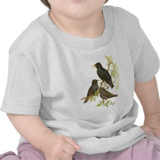 Europeo Starling Camisetas