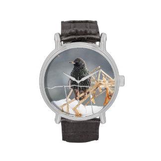 Europeo Starling Relojes De Pulsera