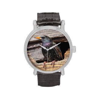 Europeo Starling Reloj De Mano