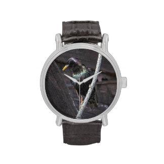 Europeo Starling Reloj
