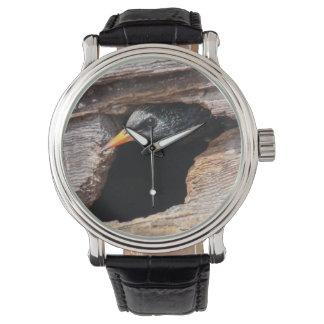 Europeo Starling Relojes