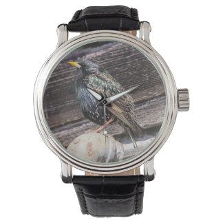 Europeo Starling Relojes De Mano