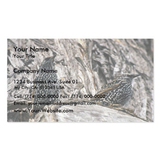 Europeo Starling Tarjetas De Visita