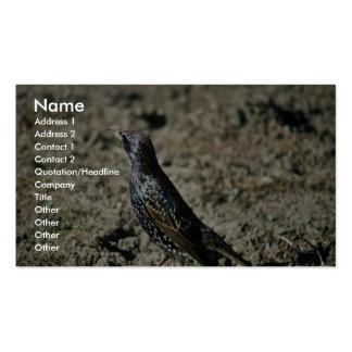 Europeo Starling Plantilla De Tarjeta De Negocio