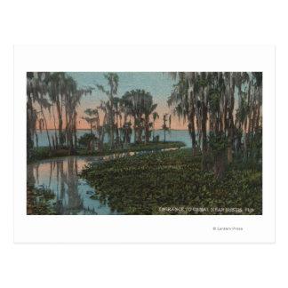 Eustis, Florida - View of Swampy Canal Postcard