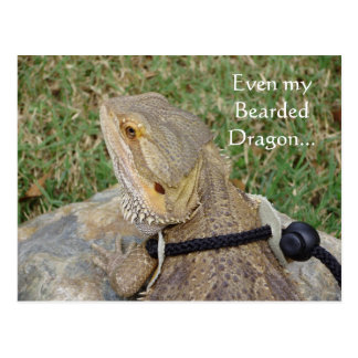 Even my Bearded Dragon... Postcard