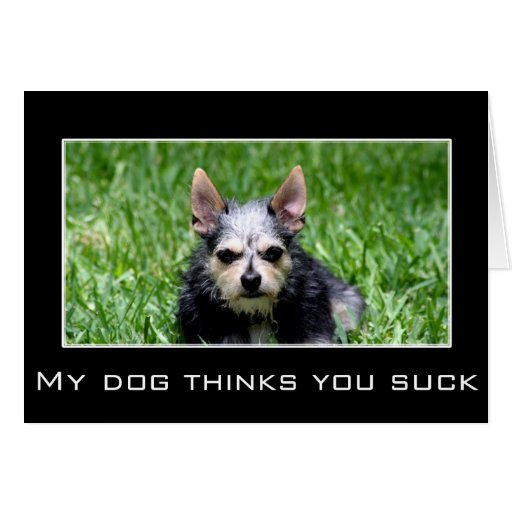 Even my dog knows you suck card