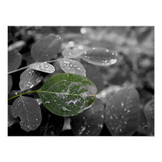 Even The Leaves Are Crying Poster