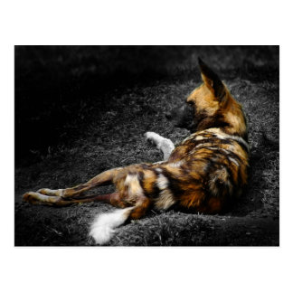 Even Wild Dogs Rest Postcard