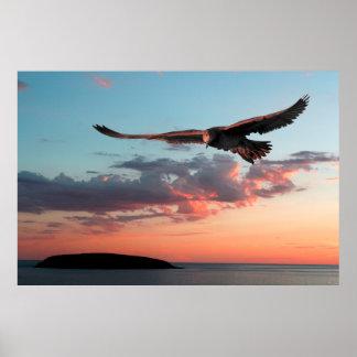 Evening Albatross Poster
