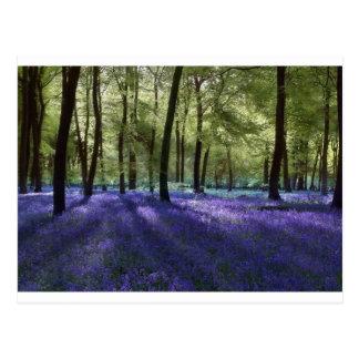 Evening Bluebells Postcard