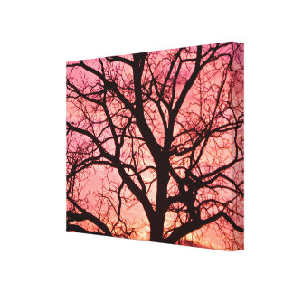 Evening Blush Tree Silhouette Stretched Canvas Prints
