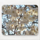 Evening Cherry Blossoms I Flowering Spring Tree Mouse Pad