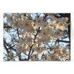 Evening Cherry Blossoms I Spring Tree Card