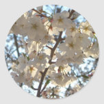 Evening Cherry Blossoms I Spring Tree Classic Round Sticker