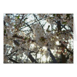 Evening Cherry Blossoms II Flowering Spring Tree Card