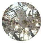 Evening Cherry Blossoms II Flowering Spring Tree Classic Round Sticker
