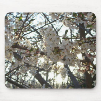 Evening Cherry Blossoms II Flowering Spring Tree Mouse Pad