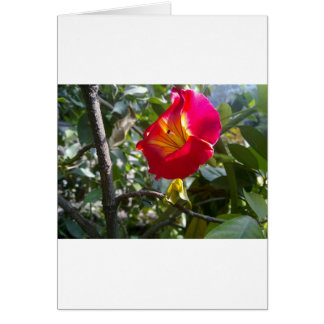 Evening Flower Greeting Card