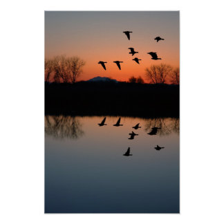 Evening Geese Poster