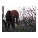 Evening Grazing Post Cards