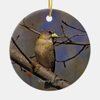 Evening Grosbeak Photography Round Ornaments