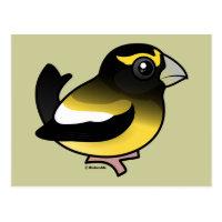 Evening Grosbeak male Postcard
