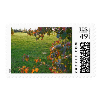Evening in Sunlight Postage