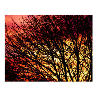 Evening Light Blank Notecard Post Card